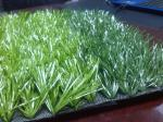 Anti-UV Anti-aging Artificial Grass Football , Stadium Soccer Turf Carpet