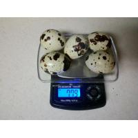 Quality Fertilized Quail Eggs