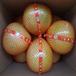 Global GAP Certified Fresh Style Delicious Citrus Fruit , High Grade Sweet Honey Pomelo