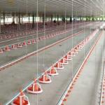 Poultry Farm Auto 380V Chicken House Equipment