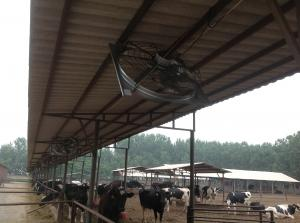 China cow shed  cooling  fan  for  livestock  barns on sale