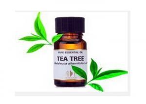 China Cosmetic Moisturizer White Transparent Liquid Tea Tree Oil  CAS 8024-02-0 on sale