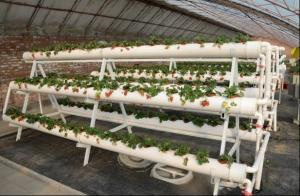 China Transparent Greenhouse Strawberry Production , Anti Fog Plastic Film Greenhouse on sale