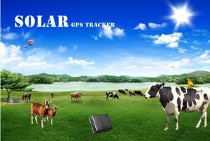 China Sim card gps solar tracking system with free software mini gps tracker waterproof for cow/ on sale