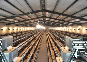China Automatic Layer Chicken Cage System with Eggs Collection System on sale