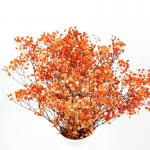Colorful Dried Baby'S Breath Bouquet , Preserved Baby'S Breath For Gift