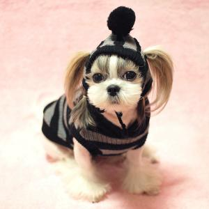 China pet heat clothes on sale