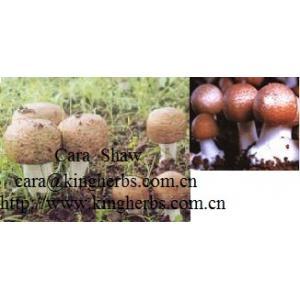China Extrato do cogumelo de Blazei do agaricus de China para a venda on sale