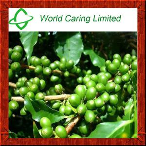 China Green Coffee Bean Extract Total chlorogenic acid 50%-70% herbal extract for weight loss on sale