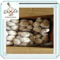 fresh ginger and garlic Professional bulk garlic with great price