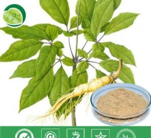 China Manufacturer Pure Natural High Qulity Suma Extract, Pfaffia Paniculata Extract, Brazilian Ginseng Extract on sale