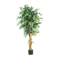 China 6' Palace Style Ficus Silk Tree on sale