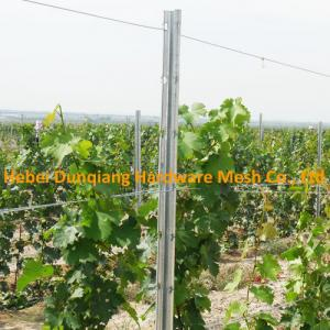 275g M2 Zinc Coating Galvanized Metal Vineyard Grape Trellis Post