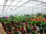 Exhibition Commercial Outdoor Greenhouse , Flower Growing Large Green Houses