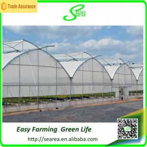 China Multispan poly agriculture greenhouse for  vegetable tomato grow green house on sale