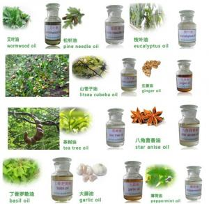China Essential oil,organic essential oil,pure natural essential oil on sale