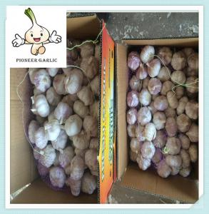 China good brand organic garlic garlic in china with great price on sale