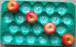China 29*49cm Green 22# Eco-friendly PP Fruit Packaging Tray for Apple on sale