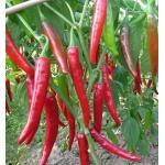 sauce chili