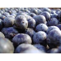 China Supply Acai Berry Extract Powder on sale