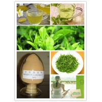 China Green tea extract powder on sale