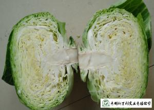 China Oval Shape Green Pointed Head Cabbage Lower Blood Pressure 1 - 3 KG / PER on sale