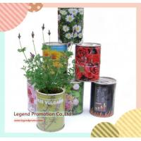 China Flower and magic bean in can growing message idea gift in one euro shop on sale