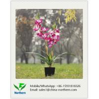 80cm Artificial Orchid in Plastic Pot
