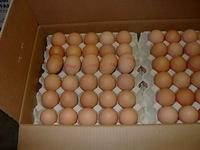 China Farm Fresh Chicken eggs on sale