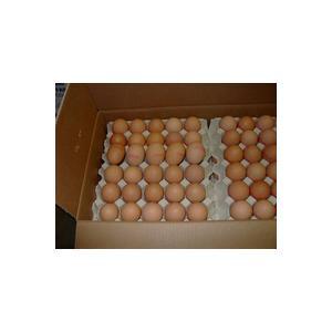 China Farm Fresh Chicken eggs on sale
