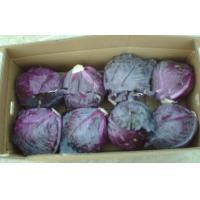 Organic Round Purple Fresh Chinese Napa Cabbage Crispy Contains Vitamin-A , Thiamin, Antibacterial anti-inflammatory