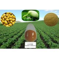 100% Natural 40-80% Isoflavones Fine Powder Soy Extract --Glycine max (L.) Merri