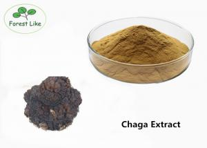 China Pure Chaga Mushroom Extract Powder 50% Polysaccharides Cure Skin Diseases on sale