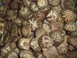 随州市は椎茸きのこを乾燥しました
