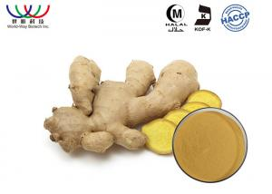 China Raw Material Ginger Root Extract Natural Food Grade Anti Inflammatory For Medicine on sale