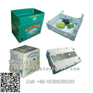 China Risen best price diverse pattern plastic vegetable boxes,gift boxes,fresh mushroom packing box on sale