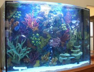 China 2012 hot sale fish and new design tank and cylindrical acrylic aquarium on sale