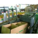 Automatic Case Filling Packaging Machine