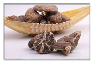 China Champignon sec, champignon ediable, campestris secs d'agaricus, champignon de shiitaké sec on sale