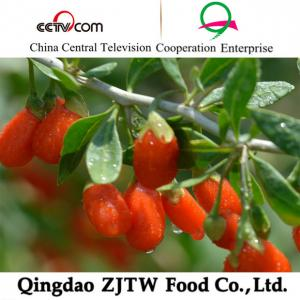 China goji berry on sale