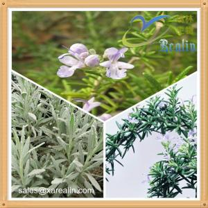 China Natural Rosmarinic Acid Rosemary Extract Powder on sale
