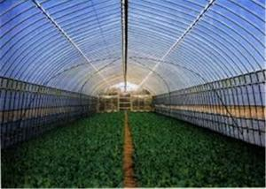 China 1-11m LDPE Plastic Greenhouse Film For Vegetables And Fruits Planting on sale