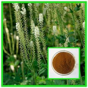 China 100% Natural Black Cohosh Plant Extract/Black Cohosh Root Extract/Black Cohosh Powder on sale
