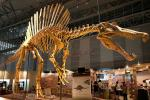 Huge Complete Dinosaur Fossil Model For Shopping Mall / Open Air Museum