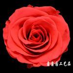 flor preservada R0105, flor, presente