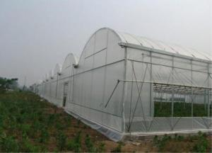 China Larger Insect Mesh Netting Agricultural Covering Material 100-150m/ Roll on sale