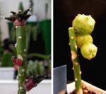 mini Succulent plants indoor plants bonsai