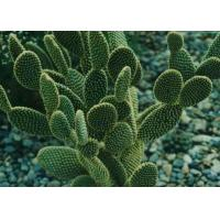 Hoodia Gordonii Extract Hoodia Gordonii Extract Manufacturers And