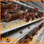 Hot Sale High Quality Poultry Farm Chicken Layer Cages automatic cage system with Low Price