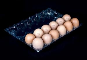 China High quality 12 holes PVC plastic egg trays for farm supermarket on sale